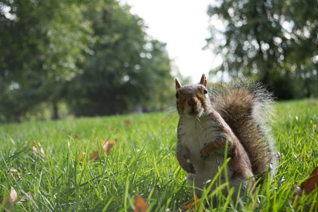 Squirrel hoping you will come to the outdoor service